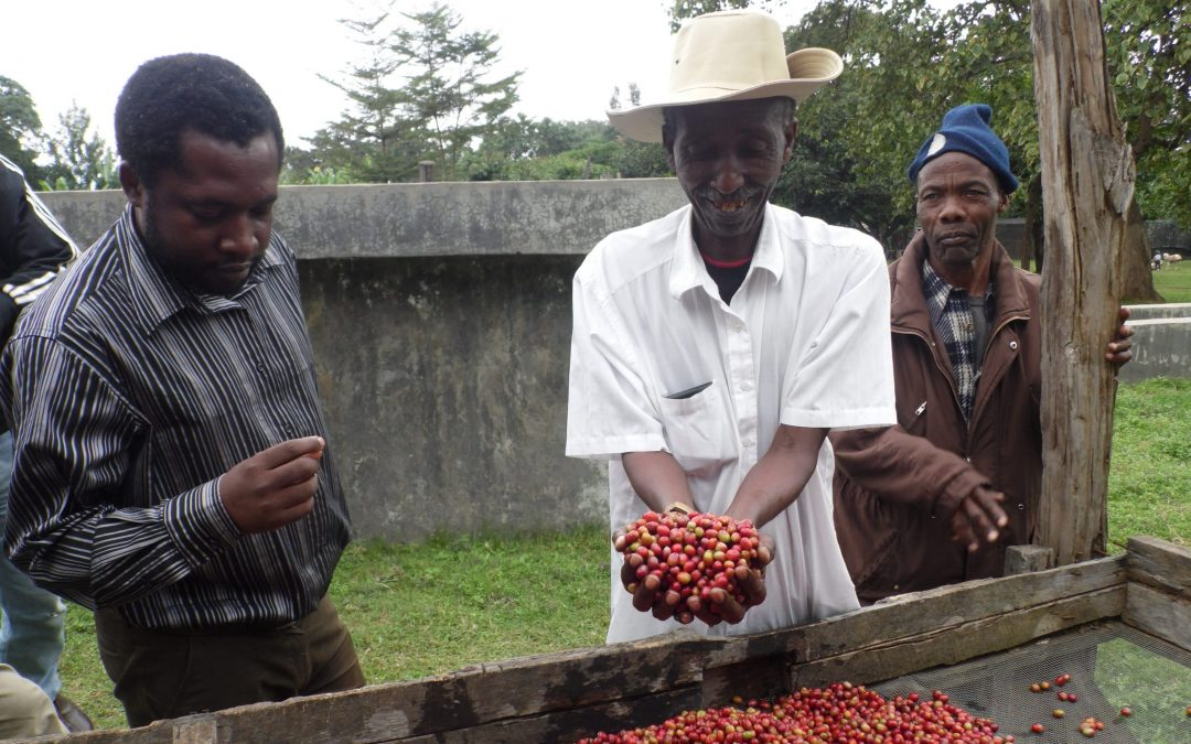 Farmer Story: Meet Jimmy Kalonga