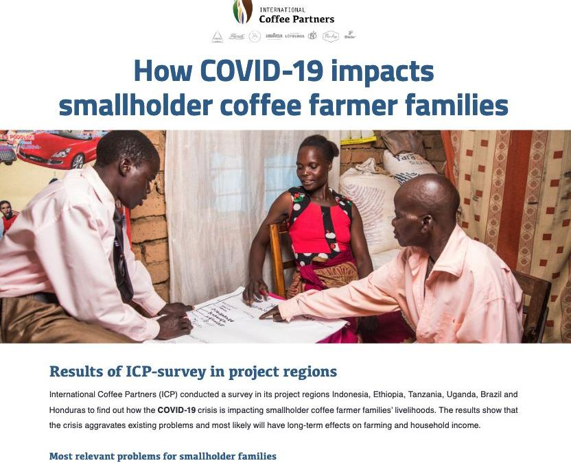 How COVID-19 impacts smallholder coffee farmer families