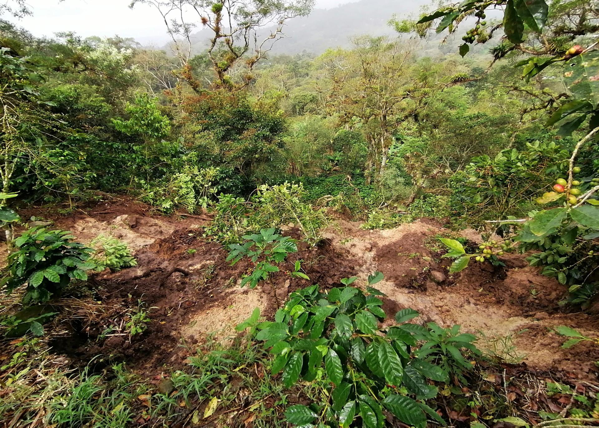 Effects of climate change can hinder sustainable coffee production und livelihoods
