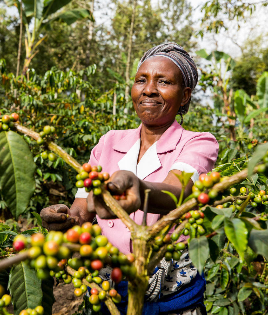 Woman standing in coffee field