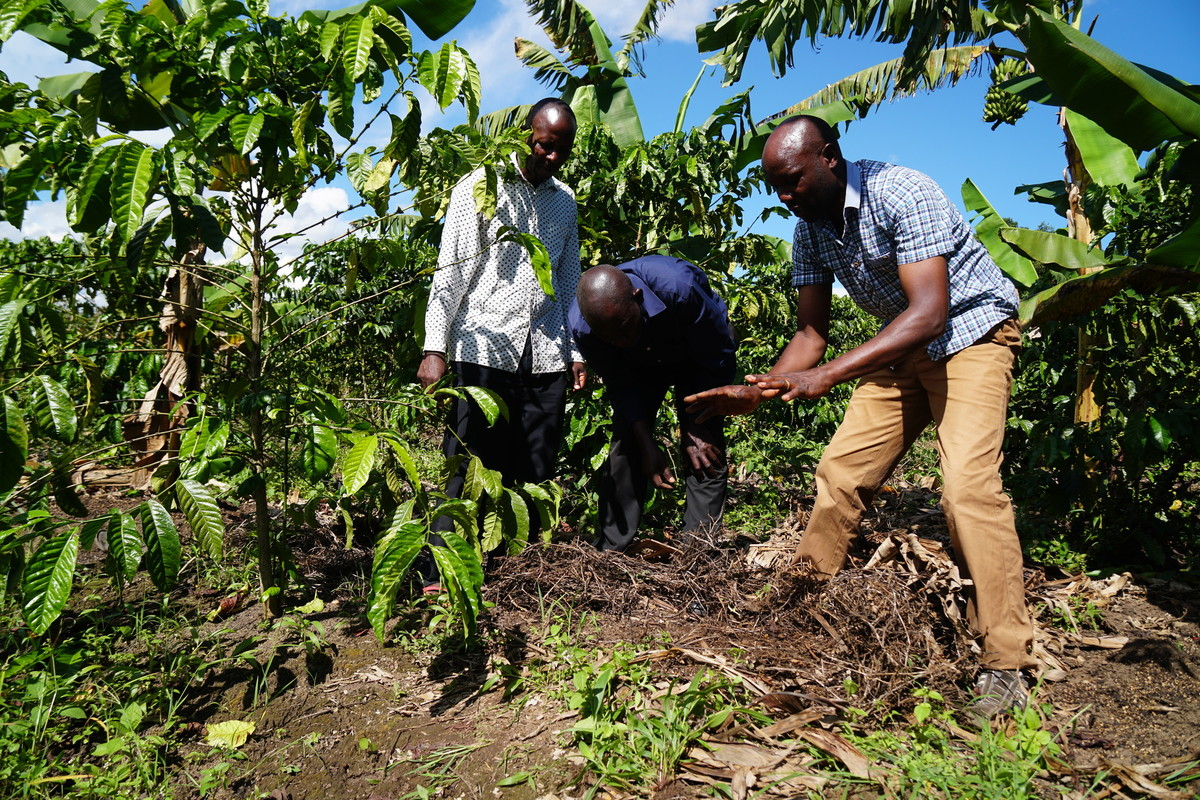 c&c Extensionist Trainer supporting coffee farmers