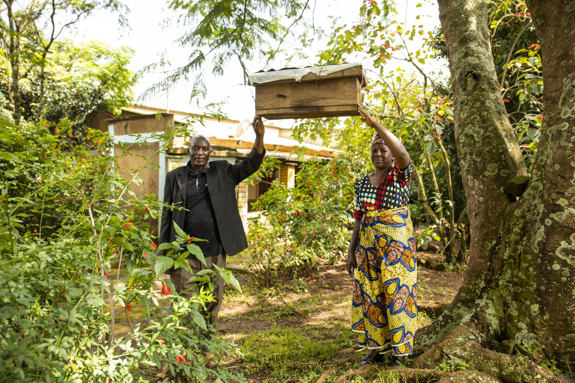 Tanzania: One of Emil and Lugano's beehives which provides income from honey.